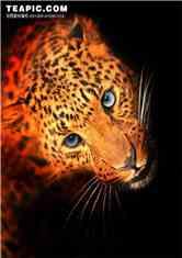 从猎豹开始的进化