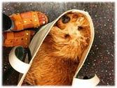 在美国纽约 乘客都是这样带狗上地铁的