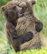 美失散熊崽兄妹重逢后紧紧相拥