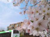 杭州樱花公交车站