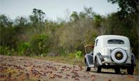 古巴百万只螃蟹横行,当地人怕有毒不敢食用。