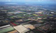 荷兰郁金香花开,花农现代化机器收割。