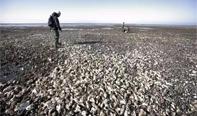 丹麦生蚝泛滥,大使馆求助。